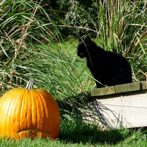 Cat-and-Pumpkin